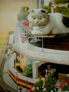 Makoto rescatado desde la página hansui Crazy Cat Lady, Crazy Cats, Funny Cat Photos, Cat Towers, Coin Art, Cat Sketch, Alternative Art, Kittens And Puppies, White Cats