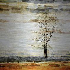 'Lone Tree' by Parvez Taj Painting Print