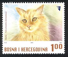 Macka  - Cat | postal stamp, Bosnia and Herzegovinak 2007