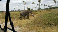 Serengeti National Park, Tanzania, National Parks, Elephant, Animals, Animales, Animaux, Elephants, Animal