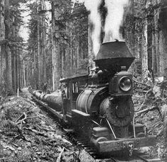 Jumbo steam engine hauling logs in 1905 through the Bridalveil Loop, Yosemite