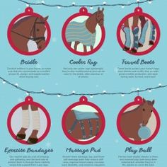 What are the best Christmas gifts for your horse? That's easy! You should choose anything that will make your horse feel comfortable. Think about ge