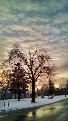 Vineland Snow storm 2015
