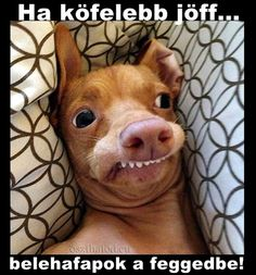 Make Phteven tuna the dog memes or upload your own images to make custom memes Animals And Pets, Funny Animals, Cute Animals, Cute Animal Pictures, Funny Pictures, Funny Dog Faces, Dog Crossbreeds, Happy Birthday Dog, Ugly Dogs