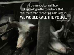 If our next-door neigbor kept a dog in the conditions that well more than 90 % of pigs are kept, WE WOULD CALL THE POLICE.  ~Jonathan Safran Foer