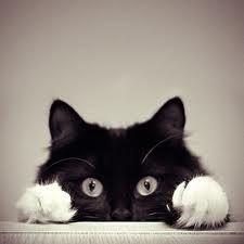 cute pets - Google Search