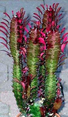 How To Use Succulent Landscape Design For Your Home Succulent Gardening, Succulent Terrarium, Cacti And Succulents, Planting Succulents, Planting Flowers, Agaves, Cactus Names, Cactus House Plants, Cactus Plante