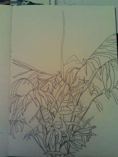 planta linhas