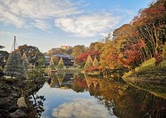 Where to view cherry blossoms, enjoy a summer picnic, admire the fall leaves or stroll through the winter greenery. The 20 top picks of Tokyo Japanese gardens, whenever you visit! Cherry Blossom Season, Cherry Blossom Tree, Blossom Trees, Japanese Garden Plants, Japanese Gardens, Tropical Greenhouses, Tokyo Travel Guide, Shinjuku Gyoen, Temple Gardens