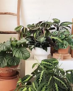 The Sill (@TheSill) / Twitter House Plants Decor, Garden Plants, Room With Plants, Calathea Roseopicta, Fake Plants, Indoor Cactus Plants, Cactus House Plants, Cactus Art, Hanging Plants