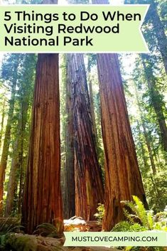 5 Things to Do When Visiting Redwood National Park