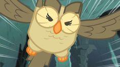 My Little Pony Friendship is Magic owl  - Owlowiscious