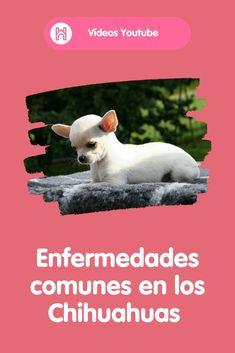 22 Mejores Imagenes De Videos Youtube Host A Pet Perros Mascotas Gatos