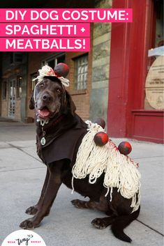 I had the idea to dress my two chocolate labradors up as Spaghetti and Meatballs for Halloween! This DIY costume is made with felt, yard and foam craft balls. If you love to eat, or if you're Italian, this is the perfect DIY dog Halloween costume! This dog costume is so unique, you will not see anyone else with it! Stand out as Spaghetti and Meatballs! This costume is dog walk friendly (although you might loose a few meatballs!). Halloween Costumes To Make, Diy Dog Costumes, Dog Halloween, Halloween Ideas, Dog Washing Station, Chocolate Labradors, Chocolate Labs, Durable Dog Toys, Funny Dog Memes