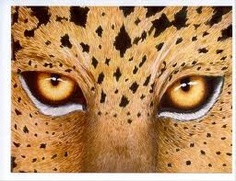 Wild Eyes by Lorraine Foster Symmetry Photography, Wild Eyes, Eye Painting, Lorraine, Taurus, The Fosters, Wall Art, Cats, Animals