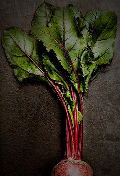 Verde Minho e vermelho beterraba # Minho green and beetroot red Red Juice Recipe, Juice Recipes, Black Background Photography, Fiber Rich Foods, Slow Food, Fruit And Veg, Beetroot, Diet And Nutrition, Beets