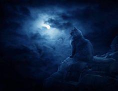 Мистические кошки от by_moroka323