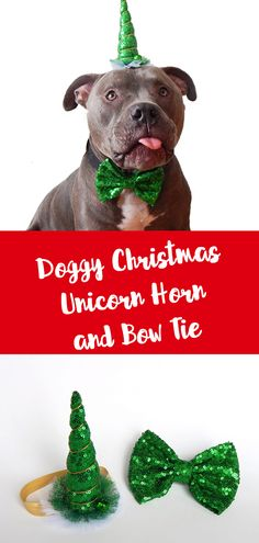 00f8ea0983 Cute sequin unicorn horn hat and bow tie set for the dog lover. Hello  Stubby Lou · Fun Pit Bull Stuff