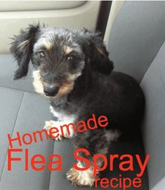 Flea Spray For Dogs, Flea And Tick Spray, Homemade Flea Spray, Homemade Dog, Homemade Recipe, Homemade Crafts, Dog Flea Remedies, Flea Remedy For Dogs, Homeopathic Remedies
