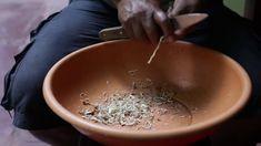 Evaluación de la eficacia de la Medicina Tradicional Amazónica en el ali... Coconut Flakes, How To Dry Basil, Spices, Herbs, Medicine, Health Professional, Garlic, Amazons, Traditional