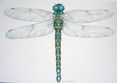 Green Dragonfly Giclee print by drawingsfromnature on Etsy, £85.00