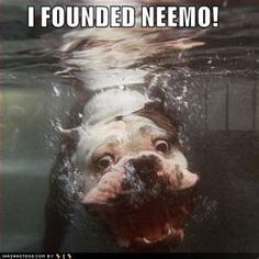 Dog Underwater Nemo