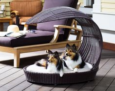 If I has a little dog, I would SO get one of these!  LOVE IT  The Refined Canine Outdoor Dog Chaise Lounger - Espresso