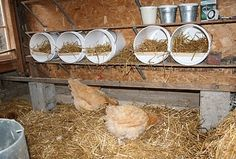 Egg laying chickens should have a comfortable place to sit and nest if you don't want them to lay eggs here and there and everywhere. All pre-made chicken coops or chicken coop plans will include nesting boxes (one cubic … Continue reading → Chickens And Roosters, Pet Chickens, Chickens Backyard, Backyard Coop, Chicken Coup, Chicken Pen, Soul Chicken, Chicken Roost, Recipe Chicken