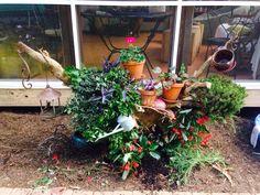 arbre mort bois flott et souche d 39 arbre pour d corer le jardin souche plantes vertes et. Black Bedroom Furniture Sets. Home Design Ideas