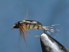 Fly Tying a Bead Eye Pheasant Tail Nymph with Jim Misiura - YouTube