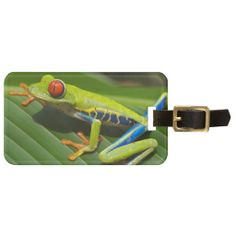 Beautiful red eyed tree frog tag for bags