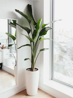 Beautiful Indoor Plants Design in Your Interior Home - Bring nature inside with house plants. There are home plants in all sorts, shapes and sizes – som - Beautiful design Home indoor interior plants 823103269381194618 Minimalist House, Minimalist Kitchen, Minimalist Interior, Minimalist Decor, Minimalist Apartment, Modern Minimalist Bedroom, Tall Indoor Plants, Indoor Plant Decor, Big Plants