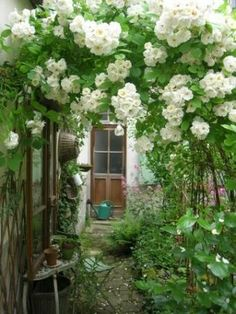 flowery trellis