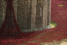 'Blood Swept Lands and Seas of Red' by artist Paul Cummins, made up of 888,246 ceramic poppies in the moat of the Tower of London to commemorate the First World War on July 28, 2014 in London, England.Each ceramic poppy represents an allied victim of the First World War and the display is due to be completed by Armistice Day on November 11, 2014. (Photo by Dan Kitwood/Getty Images)