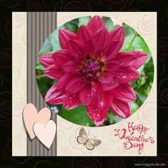 Sie finden auf dieser Seite lizenzfreie, weil von mir selbst fotografierte und verschönerte Bilder, kostenlos zum Download. #beautiful #dream #flower #flowerpicture #nature #love #photography #valentinesday #valentine