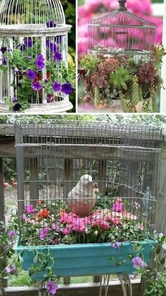 Plant in bird cages!