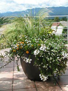 I sezonske biljke u pravoj posudi bogato cvatu