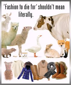 James&Co is the only womens sustainable vegan leather jackets & coats wholesale & private label brand. No toxic plastic faux leather. Stop Animal Cruelty, Animal Testing, Animal Rescue, Vegan Animals, Farm Animals, Factory Farming, The Fox And The Hound, Animal Welfare, Animal Rights