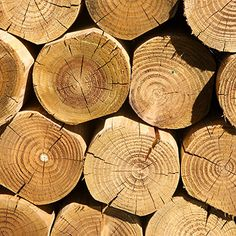 Phaunos Timber Website