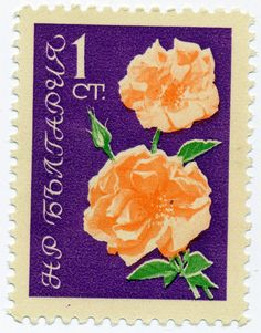 1962 Bulgarian Stamp - Rose by alexjacque, via Flickr