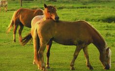 country animals |