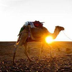 Sahara+Desert+Animals+and+Plants   ... nomad berber with his dromedary in the sahara desert morocco