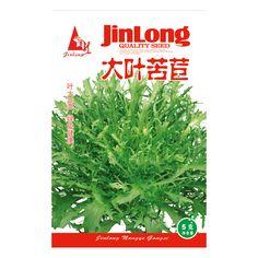 Original Pack 5g 2100+pcs Big leaf endive,Wild vegetable seeds, endive seeds bonsai plant DIY home garden free shipping