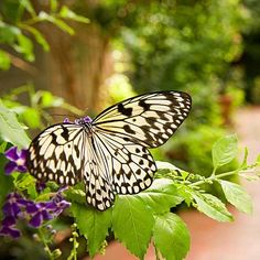 Learn how to draw birds and butterflies to your garden with BHG's bird and butterfly garden essentials