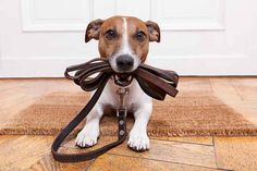 nice Top 6 Essential Products For A Happy Dog