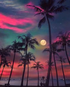 Post with 1975 votes and 103375 views. Tagged with nature, awesome, moon, singapore, palm trees; Beautiful Nature Wallpaper, Beautiful Sky, Beautiful Landscapes, Beautiful World, Beautiful Hotels, Amazing Wallpaper, Beautiful Scenery, Beautiful Beaches, Sunset Wallpaper