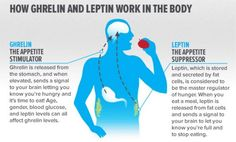 Leptin and ghrelin are two hormones that have a huge impact on your hunger levels and weight-loss success. Learn more about these hunger hormones and take control of your appetite! Colesterol Lowering Foods, Leptin And Ghrelin, Ketogenic Diet Weight Loss, Leptin Diet, Hormone Diet, Leptin Resistance, Natural Sleep Aids, Appetite Control, Belly Fat Loss