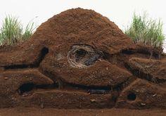 mole tunnels at DuckDuckGo Mole Removal Yard, Moles In Yard, Rabbit Burrow, Mole Repellent, Getting Rid Of Mice, Dawn Dish Soap, Taupe, Wombat, Home