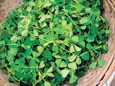 Clover is edible in its entirety