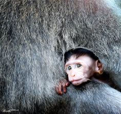 Baby Monkey - Snug what's going on?